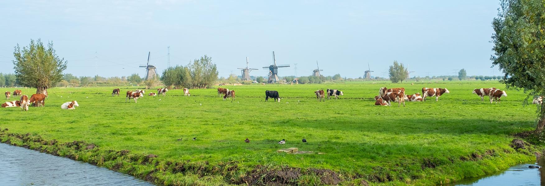 Sveiki atvykę į Nyderlandus